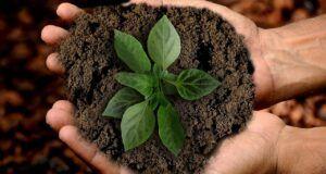 earth, scion, leaf-3289810.jpg